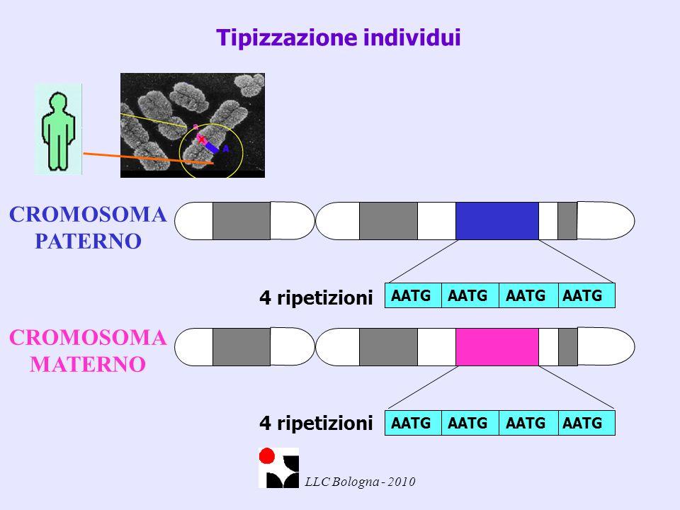 4 ripetizioni Tipizzazione individui AATG CROMOSOMA PATERNO 4 ripetizioni CROMOSOMA MATERNO AATG LLC Bologna - 2010