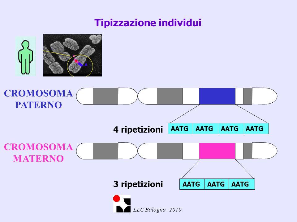 Tipizzazione individui 4 ripetizioni AATG 3 ripetizioni AATG CROMOSOMA PATERNO CROMOSOMA MATERNO
