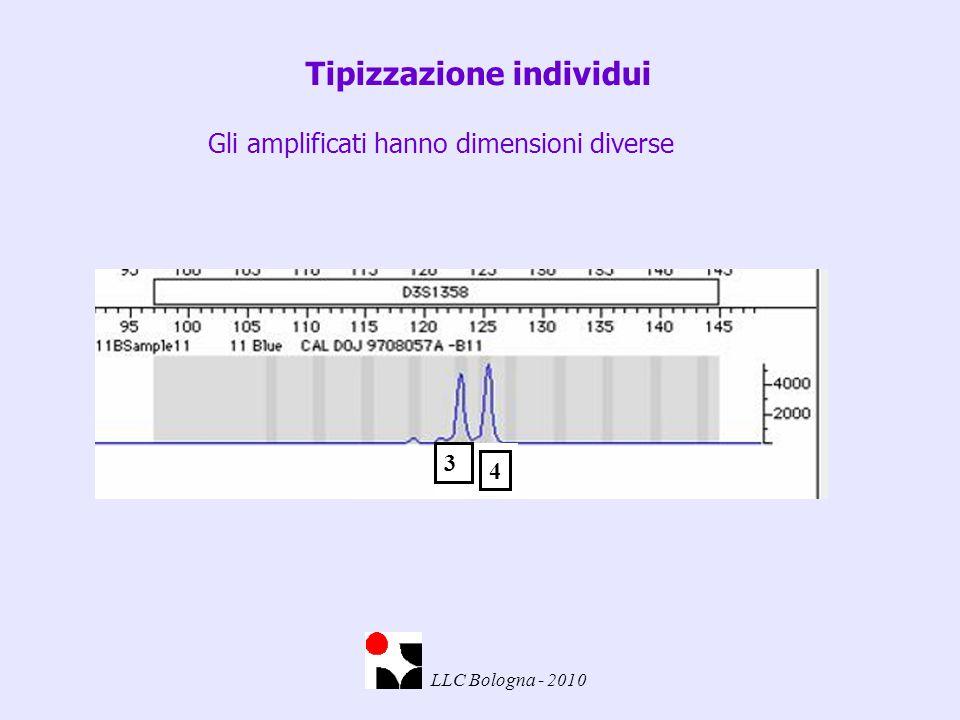 Tipizzazione individui Gli amplificati hanno dimensioni diverse 3 4 LLC Bologna - 2010
