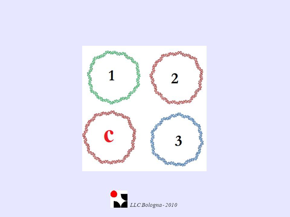 Tipizzazione individui Gli amplificati hanno le stesse dimensioni 4 LLC Bologna - 2010
