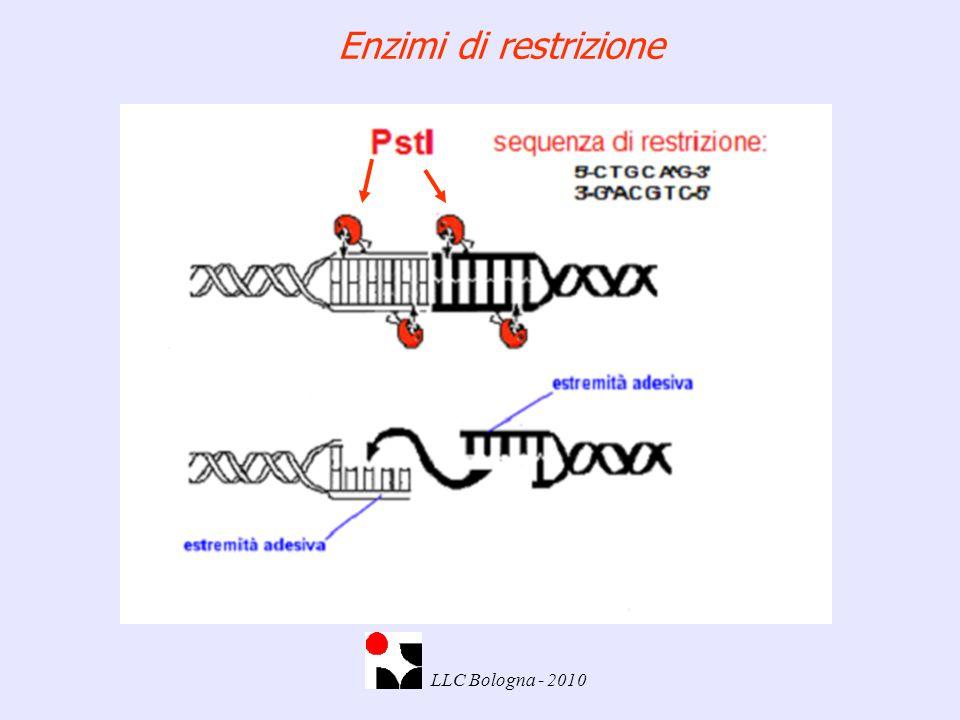 Enzimi di restrizione LLC Bologna - 2010