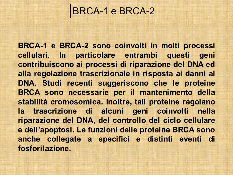 BRCA-1 e BRCA-2 sono coinvolti in molti processi cellulari. In particolare entrambi questi geni contribuiscono ai processi di riparazione del DNA ed a