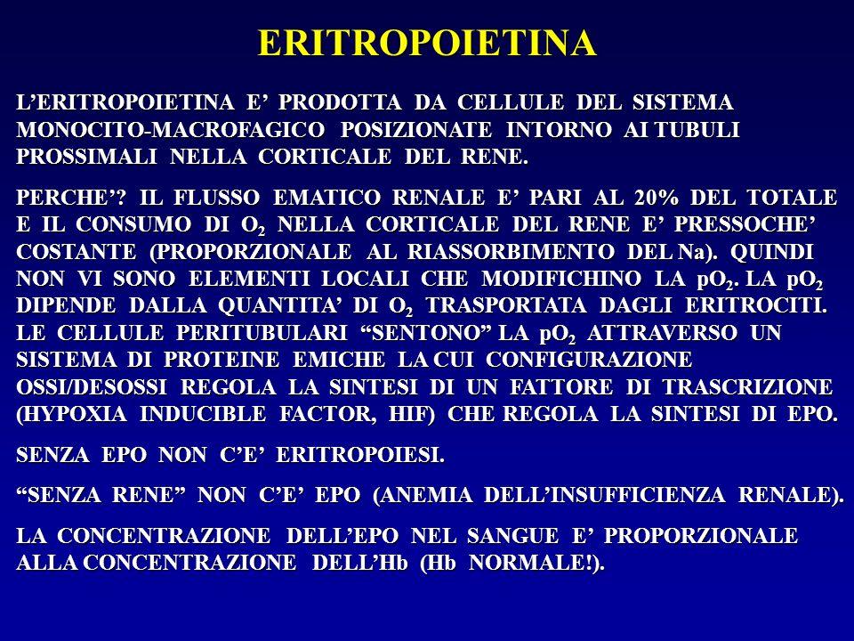 ERITROPOIETINA L'ERITROPOIETINA E' PRODOTTA DA CELLULE DEL SISTEMA MONOCITO-MACROFAGICO POSIZIONATE INTORNO AI TUBULI PROSSIMALI NELLA CORTICALE DEL R