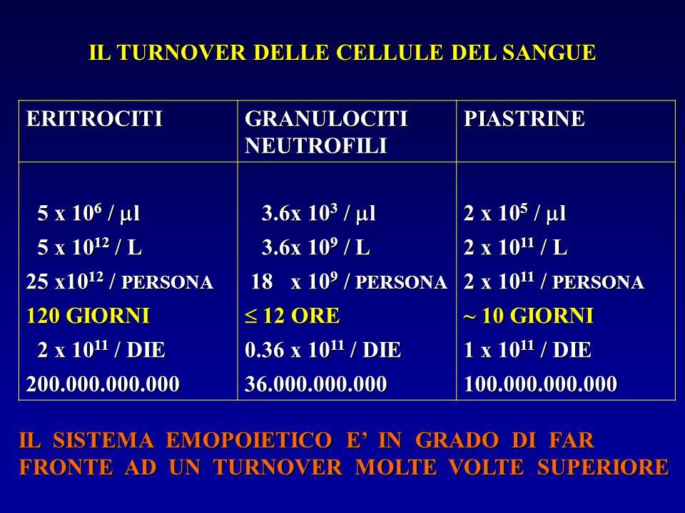 IL TURNOVER DELLE CELLULE DEL SANGUE ERITROCITI GRANULOCITI NEUTROFILI PIASTRINE 5 x 10 6 /  l 5 x 10 6 /  l 3.6x 10 3 /  l 3.6x 10 3 /  l 2 x 10
