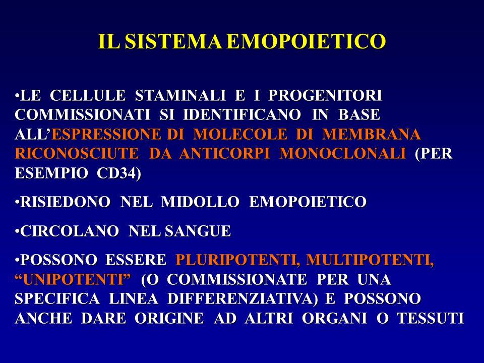 IL SISTEMA EMOPOIETICO LE CELLULE STAMINALI E I PROGENITORI COMMISSIONATI SI IDENTIFICANO IN BASE ALL'ESPRESSIONE DI MOLECOLE DI MEMBRANA RICONOSCIUTE
