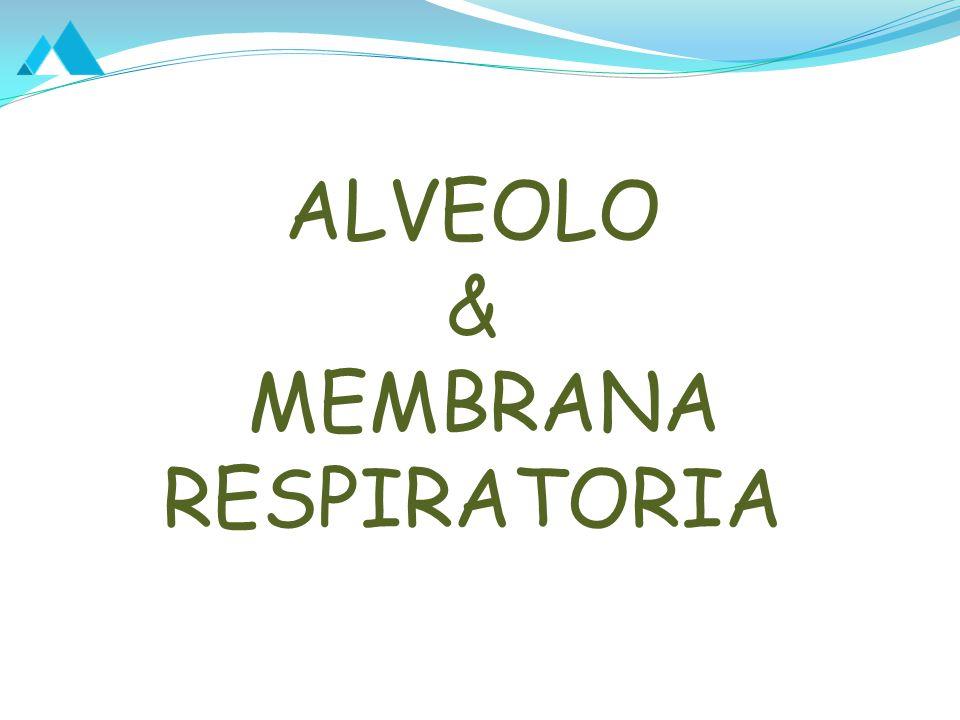 ALVEOLO & MEMBRANA RESPIRATORIA