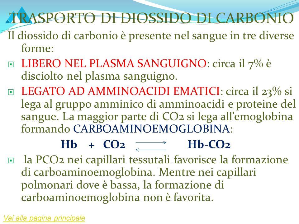 TRASPORTO DI DIOSSIDO DI CARBONIO Il diossido di carbonio è presente nel sangue in tre diverse forme:  LIBERO NEL PLASMA SANGUIGNO: circa il 7% è dis