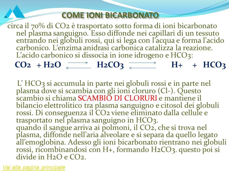 COME IONI BICARBONATO circa il 70% di CO2 è trasportato sotto forma di ioni bicarbonato nel plasma sanguigno. Esso diffonde nei capillari di un tessut