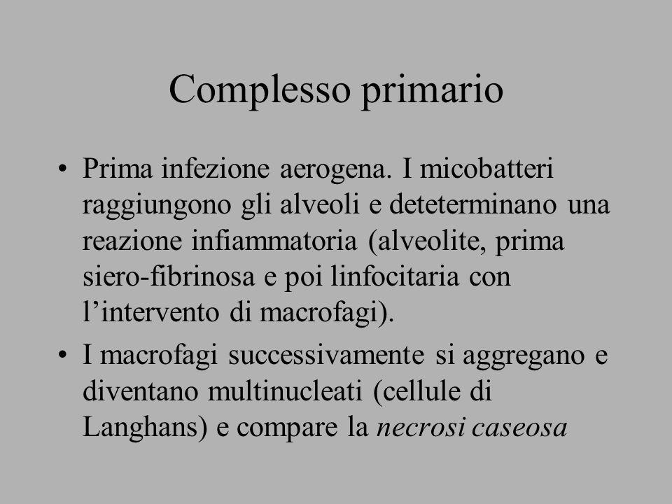 Complesso primario Prima infezione aerogena. I micobatteri raggiungono gli alveoli e deteterminano una reazione infiammatoria (alveolite, prima siero-