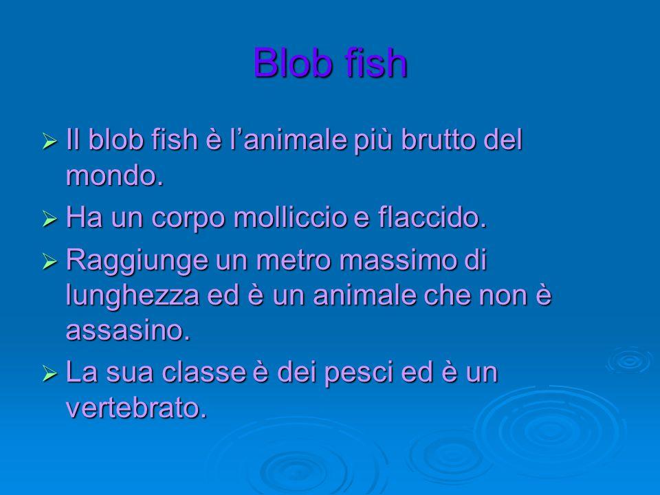 Blob fish  Il blob fish è l'animale più brutto del mondo.  Ha un corpo molliccio e flaccido.  Raggiunge un metro massimo di lunghezza ed è un anima