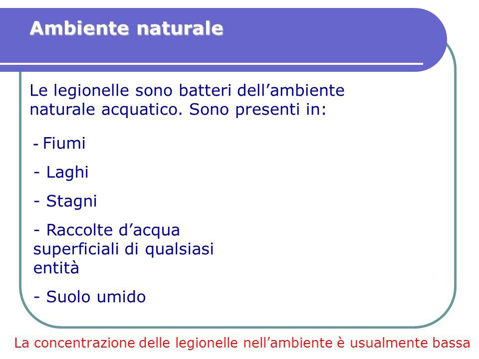- Fiumi - Laghi - Stagni - Raccolte d'acqua superficiali di qualsiasi entità - Suolo umido Ambiente naturale Le legionelle sono batteri dell'ambiente