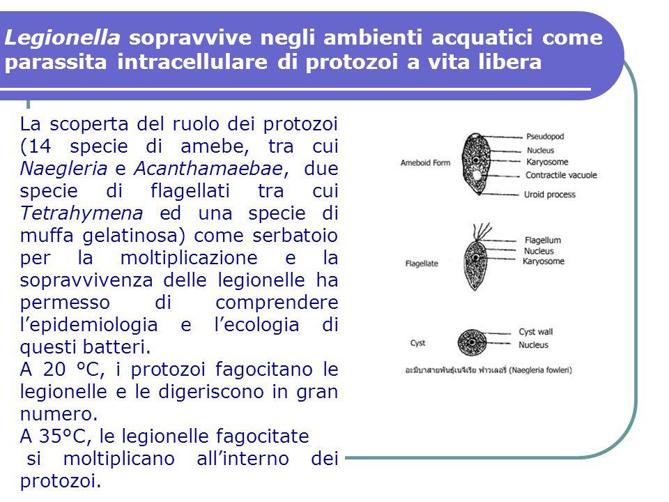 La scoperta del ruolo dei protozoi (14 specie di amebe, tra cui Naegleria e Acanthamaebae, due specie di flagellati tra cui Tetrahymena ed una specie