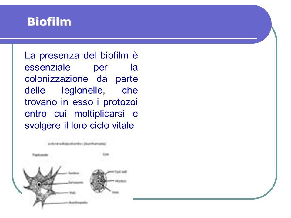 La presenza del biofilm è essenziale per la colonizzazione da parte delle legionelle, che trovano in esso i protozoi entro cui moltiplicarsi e svolger
