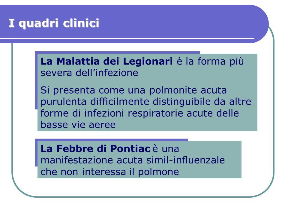 La Malattia dei Legionari è la forma più severa dell'infezione Si presenta come una polmonite acuta purulenta difficilmente distinguibile da altre for