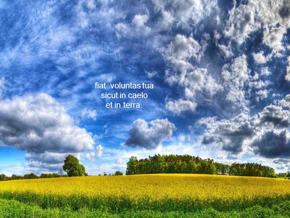 fiat voluntas tua sicut in caelo et in terra fiat voluntas tua sicut in caelo et in terra qui es in caelis, sanctificetur nomen tuum, adveniat regnum tuum,