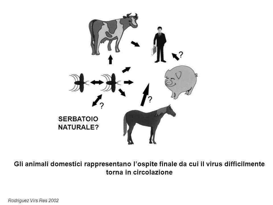 Gli animali domestici rappresentano l'ospite finale da cui il virus difficilmente torna in circolazione Rodriguez Virs Res 2002 SERBATOIO NATURALE?