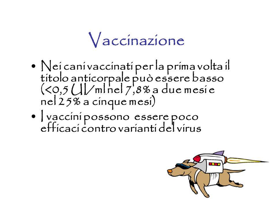 Vaccinazione Nei cani vaccinati per la prima volta il titolo anticorpale può essere basso (<0,5 UI/ml nel 7,8% a due mesi e nel 25% a cinque mesi) I vaccini possono essere poco efficaci contro varianti del virus