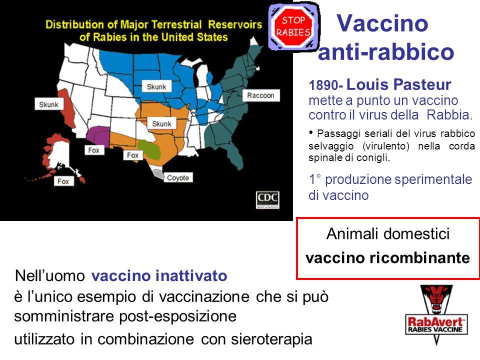 Vaccino anti-rabbico Nell'uomo vaccino inattivato è l'unico esempio di vaccinazione che si può somministrare post-esposizione utilizzato in combinazione con sieroterapia 1890- Louis Pasteur mette a punto un vaccino contro il virus della Rabbia.