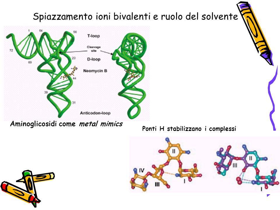 Spiazzamento ioni bivalenti e ruolo del solvente Aminoglicosidi come metal mimics Ponti H stabilizzano i complessi