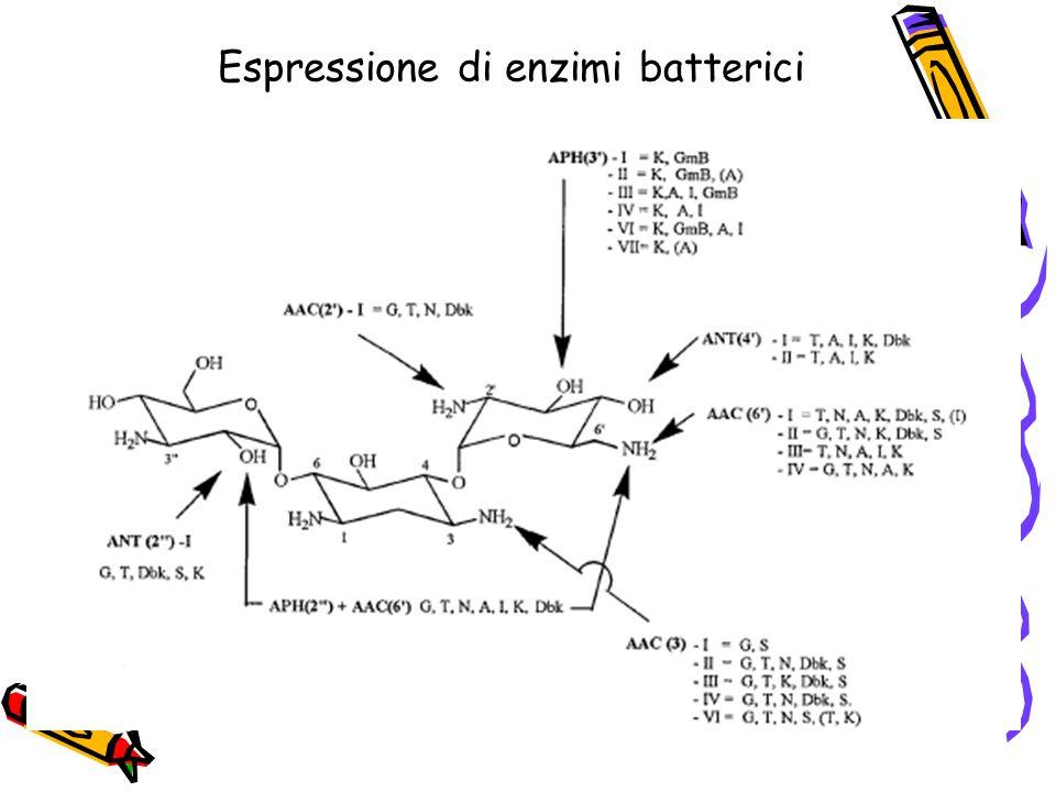 Espressione di enzimi batterici