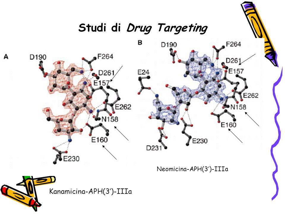 Studi di Drug Targeting Kanamicina-APH(3')-IIIa Neomicina-APH(3')-IIIa