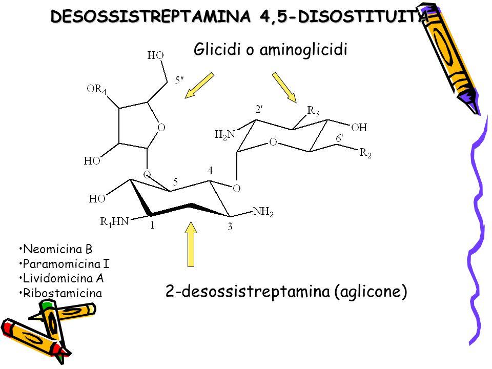 DESOSSISTREPTAMINA 4,5-DISOSTITUITA Glicidi o aminoglicidi 2-desossistreptamina (aglicone) Neomicina B Paramomicina I Lividomicina A Ribostamicina