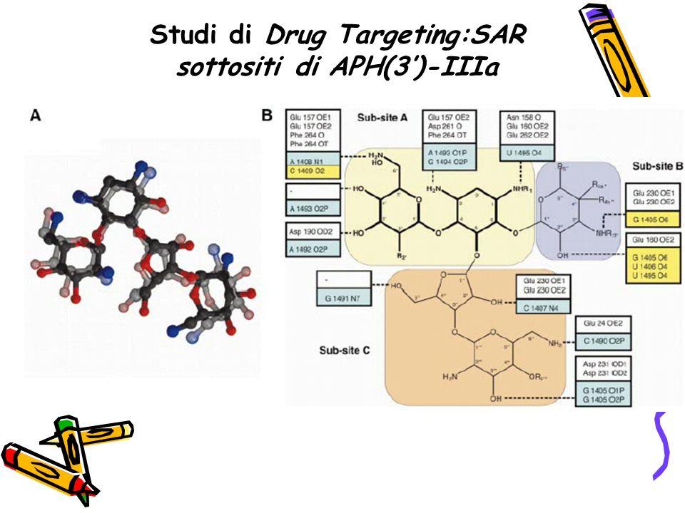 Studi di Drug Targeting:SAR sottositi di APH(3')-IIIa