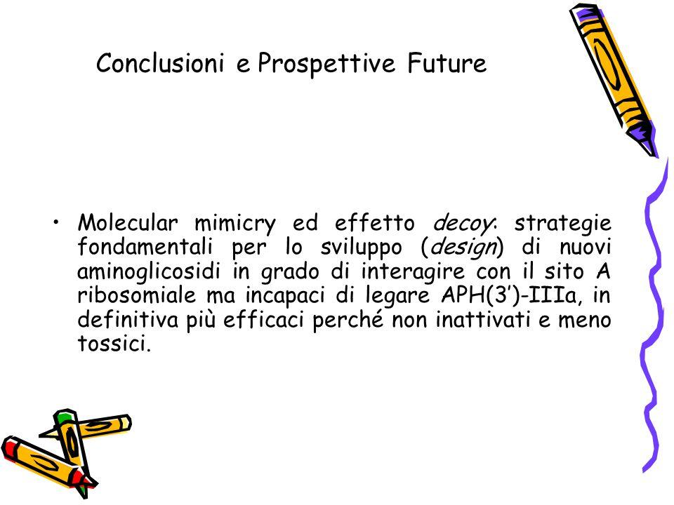 Conclusioni e Prospettive Future Molecular mimicry ed effetto decoy: strategie fondamentali per lo sviluppo (design) di nuovi aminoglicosidi in grado