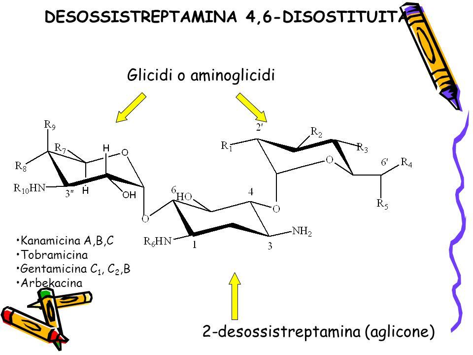 DESOSSISTREPTAMINA 4,6-DISOSTITUITA 2-desossistreptamina (aglicone) Glicidi o aminoglicidi Kanamicina A,B,C Tobramicina Gentamicina C 1, C 2,B Arbekac