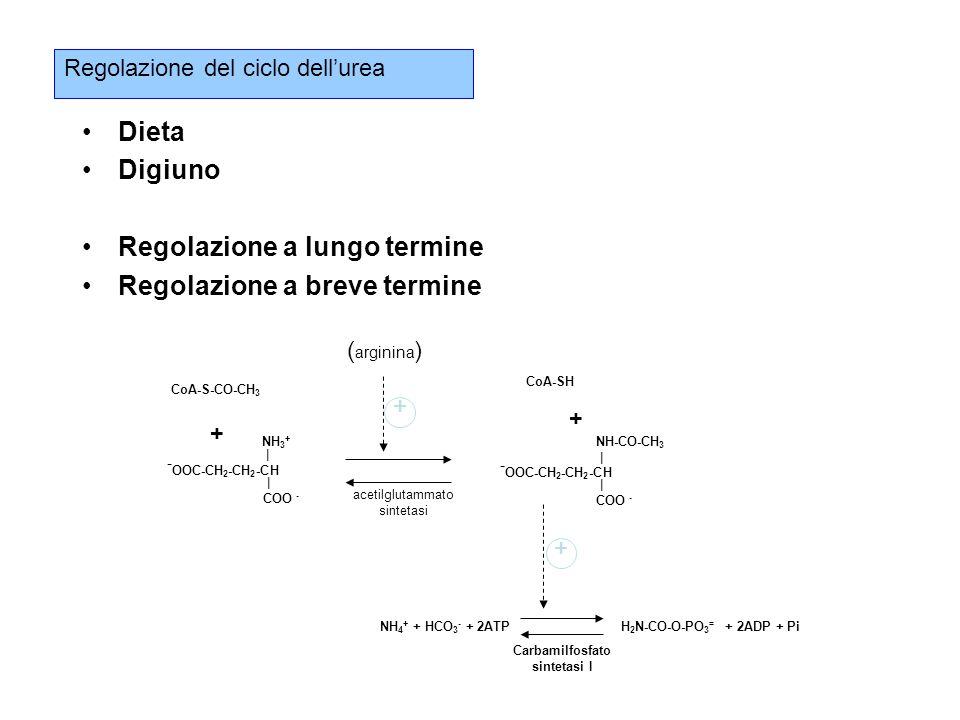 Regolazione del ciclo dell'urea Dieta Digiuno Regolazione a lungo termine Regolazione a breve termine CoA-S-CO-CH 3 + - OOC-CH 2 -CH 2 -CH | COO - NH 3 + | - OOC-CH 2 -CH 2 -CH | COO - NH-CO-CH 3 | CoA-SH NH 4 + + HCO 3 - + 2ATP H 2 N-CO-O-PO 3 = + 2ADP + Pi Carbamilfosfato sintetasi I acetilglutammato sintetasi + ( arginina ) + +