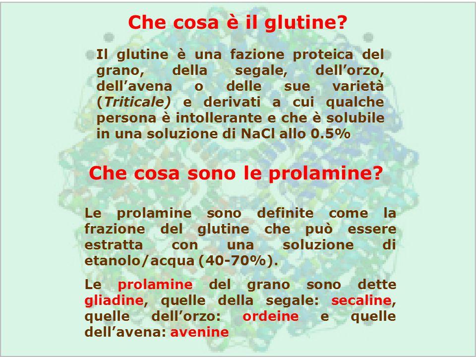 Che cosa è il glutine? Il glutine è una fazione proteica del grano, della segale, dell'orzo, dell'avena o delle sue varietà (Triticale) e derivati a c