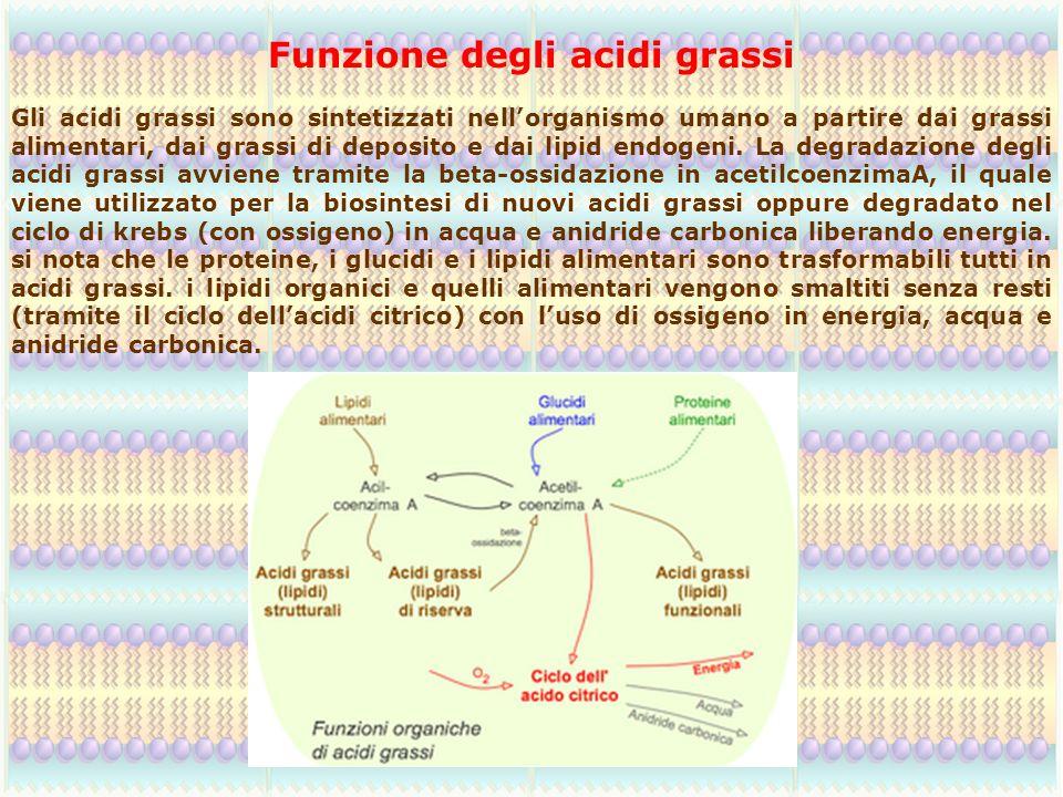Funzione degli acidi grassi Gli acidi grassi sono sintetizzati nell'organismo umano a partire dai grassi alimentari, dai grassi di deposito e dai lipi