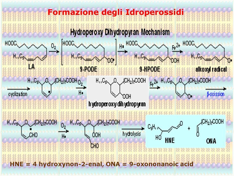 Formazione degli Idroperossidi HNE = 4 hydroxynon-2-enal, ONA = 9-oxononanoic acid
