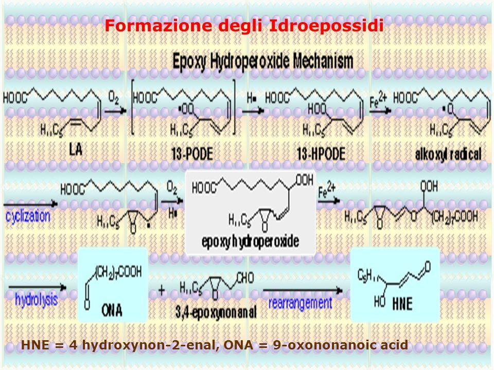 Formazione degli Idroepossidi HNE = 4 hydroxynon-2-enal, ONA = 9-oxononanoic acid