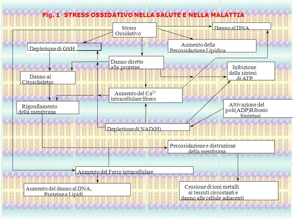Danno al DNA Deplezione di GSH Danno diretto alle proteine Danno al Citoscheletro Inibizione della sintesi di ATP Sintetasi Deplezione di NAD(H) della