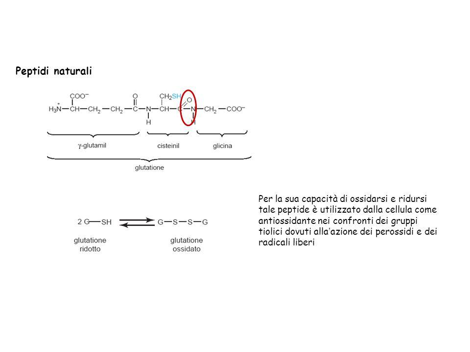 Peptidi naturali Per la sua capacità di ossidarsi e ridursi tale peptide è utilizzato dalla cellula come antiossidante nei confronti dei gruppi tiolic