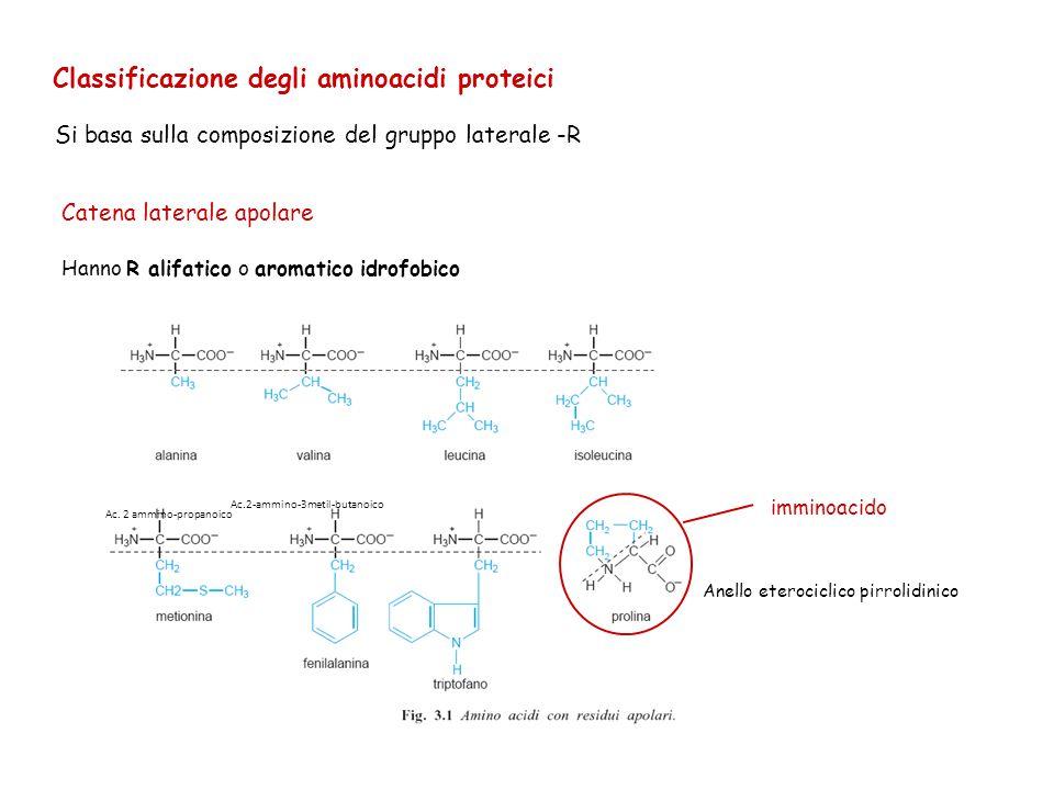 Classificazione degli aminoacidi proteici Si basa sulla composizione del gruppo laterale -R Catena laterale apolare Hanno R alifatico o aromatico idro
