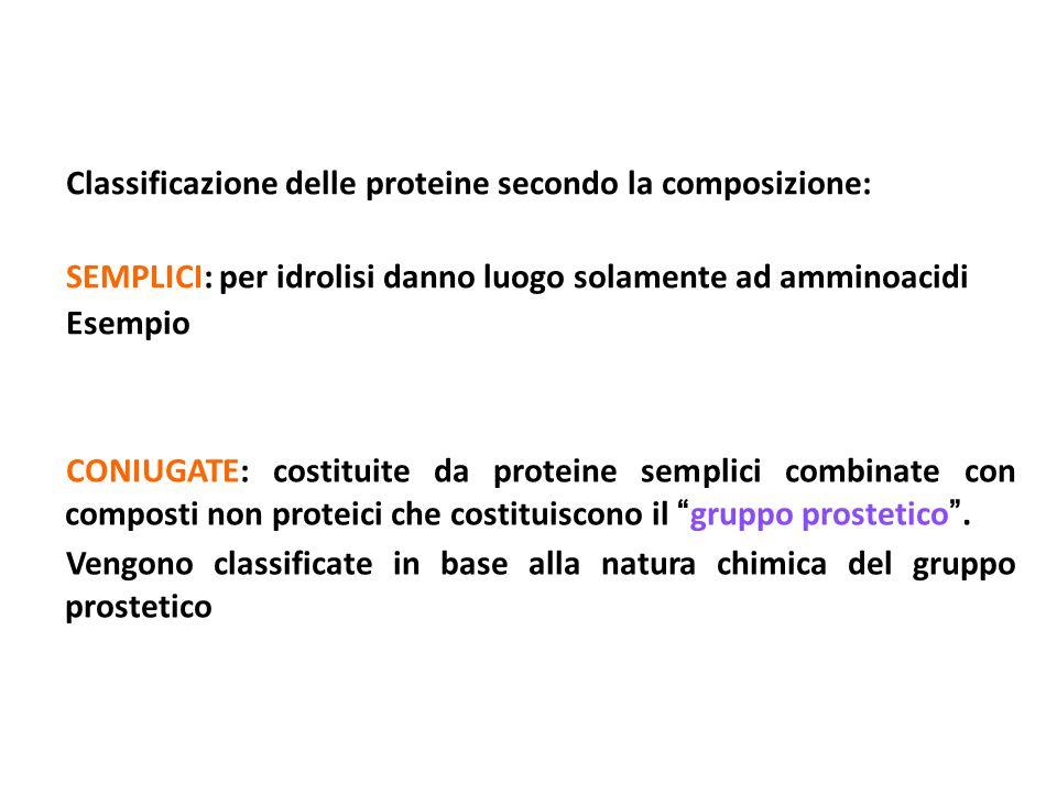 Classificazione delle proteine secondo la composizione: SEMPLICI: per idrolisi danno luogo solamente ad amminoacidi Esempio CONIUGATE: costituite da p