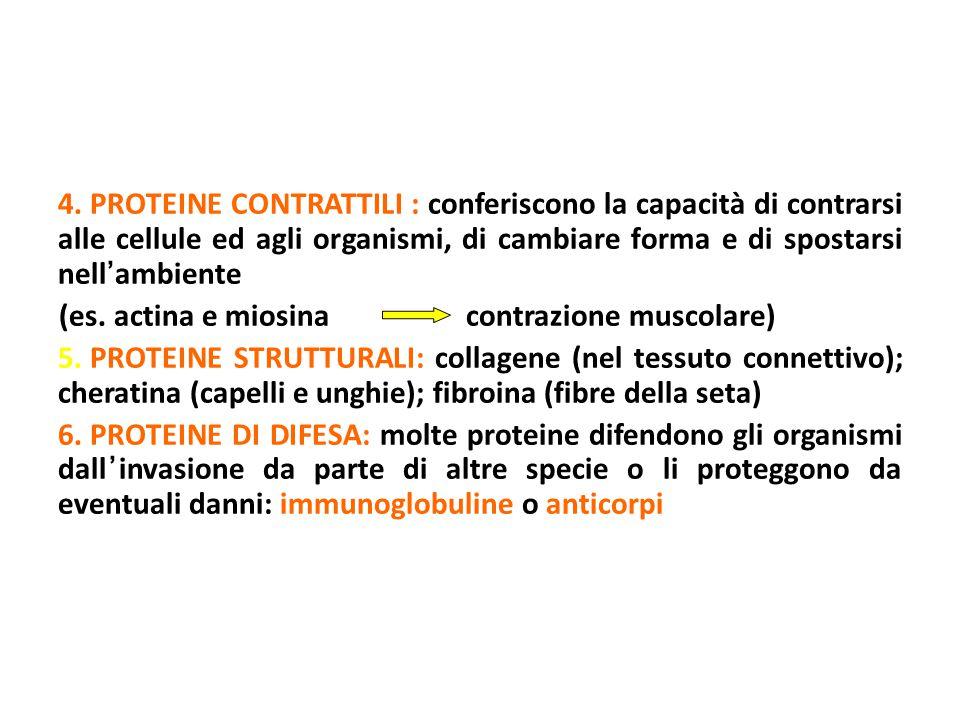 4. PROTEINE CONTRATTILI : conferiscono la capacità di contrarsi alle cellule ed agli organismi, di cambiare forma e di spostarsi nell ' ambiente (es.