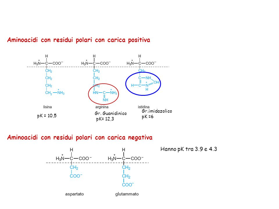 Aminoacidi con residui polari con carica positiva pK = 10,5 Gr. Guanidinico pK= 12,3 Gr.imidazolico pK =6 Aminoacidi con residui polari con carica neg