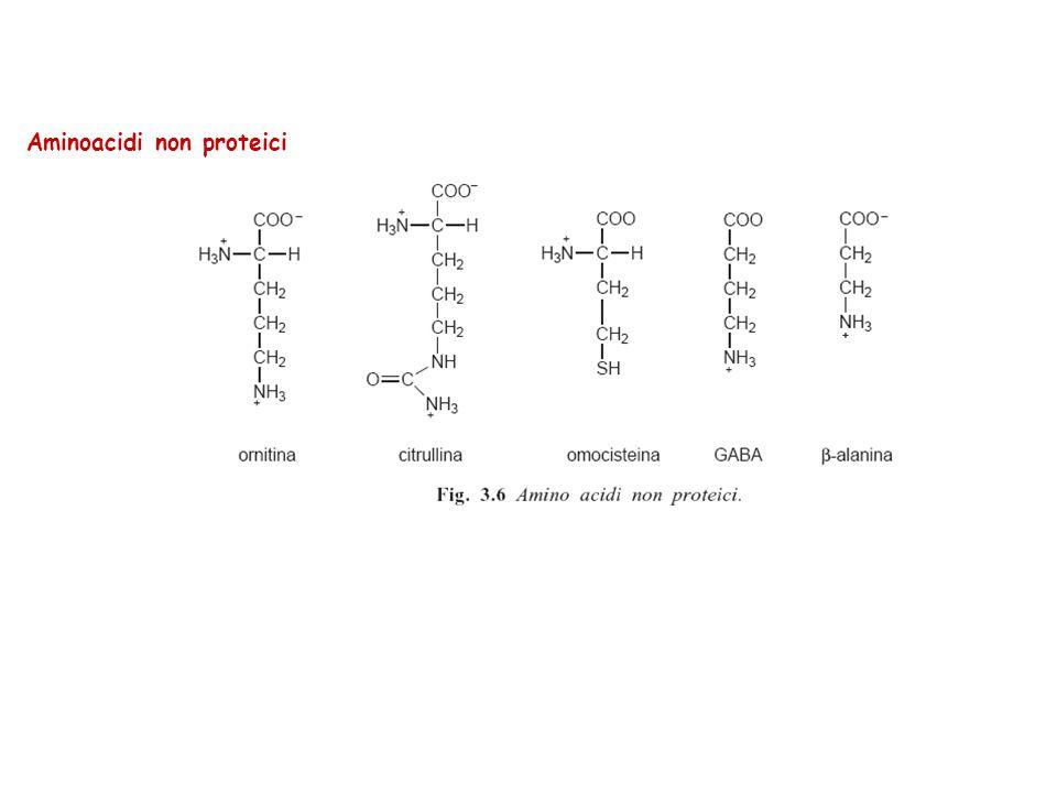 Aminoacidi non proteici