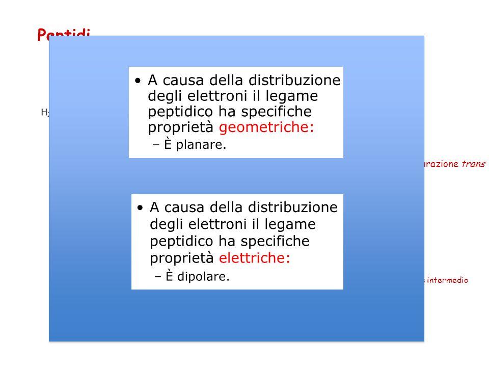 Peptidi Legame carbammidico o peptidico Struttura planare senza possibilità di rotazione Grazie all ' energia di risonanza che gli conferisce caratter