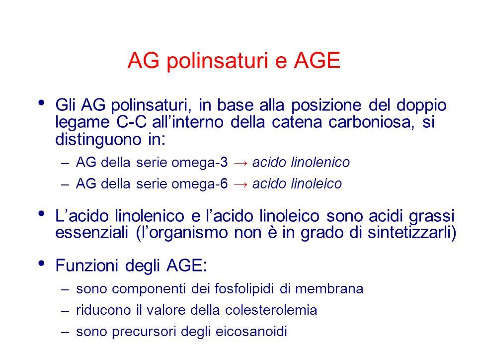 AG polinsaturi e AGE Gli AG polinsaturi, in base alla posizione del doppio legame C-C all'interno della catena carboniosa, si distinguono in : –AG della serie omega-3 → acido linolenico –AG della serie omega-6 → acido linoleico L'acido linolenico e l'acido linoleico sono acidi grassi essenziali (l'organismo non è in grado di sintetizzarli) Funzioni degli AGE : –sono componenti dei fosfolipidi di membrana –riducono il valore della colesterolemia –sono precursori degli eicosanoidi