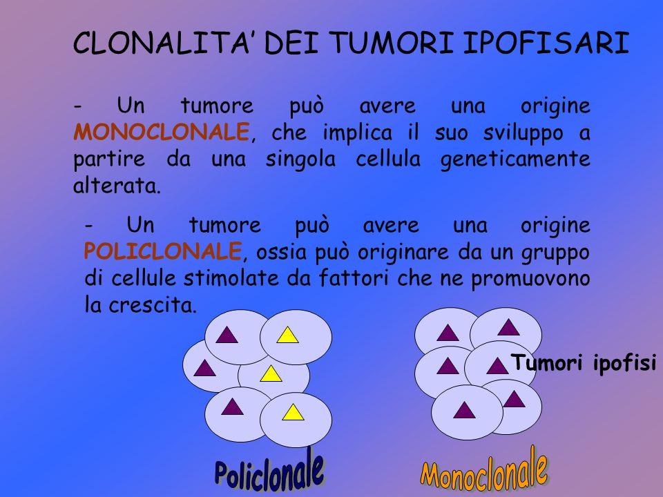 CLONALITA' DEI TUMORI IPOFISARI - Un tumore può avere una origine MONOCLONALE, che implica il suo sviluppo a partire da una singola cellula geneticame