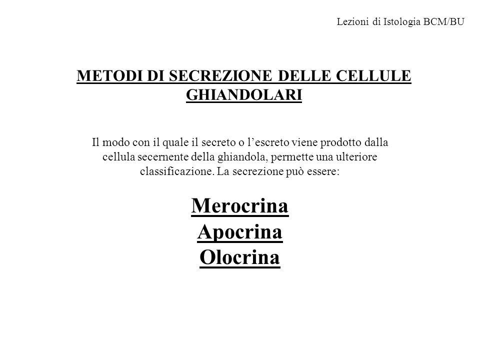 METODI DI SECREZIONE DELLE CELLULE GHIANDOLARI Il modo con il quale il secreto o l'escreto viene prodotto dalla cellula secernente della ghiandola, permette una ulteriore classificazione.