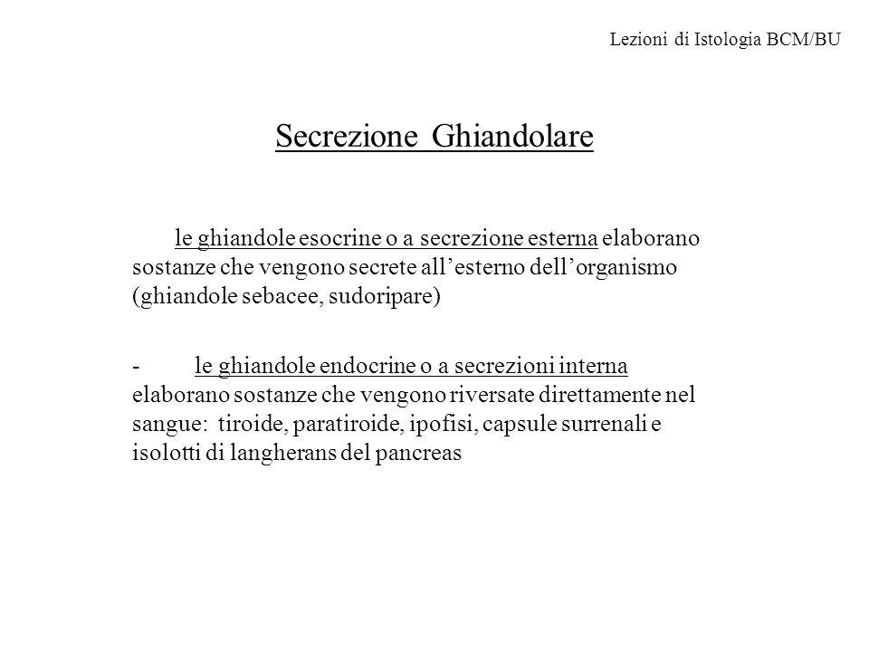 Secrezione Ghiandolare le ghiandole esocrine o a secrezione esterna elaborano sostanze che vengono secrete all'esterno dell'organismo (ghiandole sebacee, sudoripare) - le ghiandole endocrine o a secrezioni interna elaborano sostanze che vengono riversate direttamente nel sangue: tiroide, paratiroide, ipofisi, capsule surrenali e isolotti di langherans del pancreas Lezioni di Istologia BCM/BU