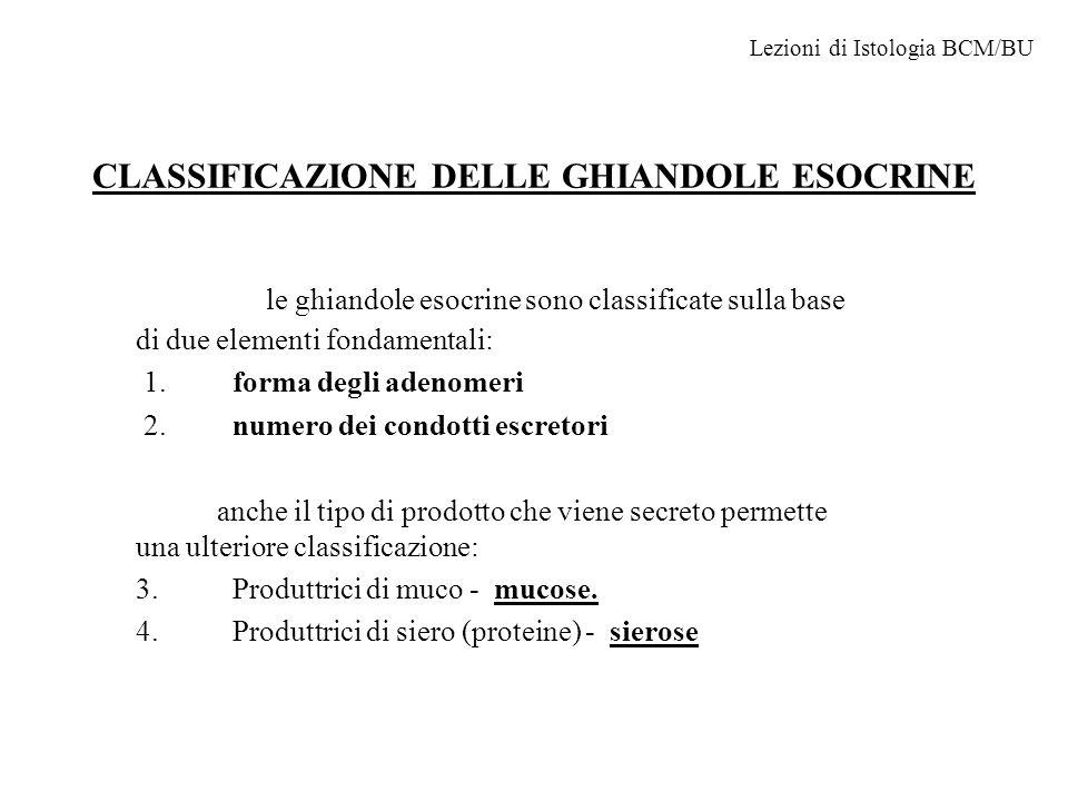 CLASSIFICAZIONE DELLE GHIANDOLE ESOCRINE le ghiandole esocrine sono classificate sulla base di due elementi fondamentali: 1.