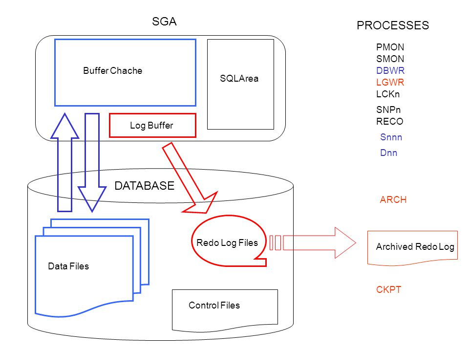 PMON SMON DBWR LGWR CKPT ARCH SNPn Snnn Dnn Log Buffer Buffer Chache SQLArea Redo Log Files Control Files Data Files DATABASE SGA PROCESSES RECO LCKn Archived Redo Log