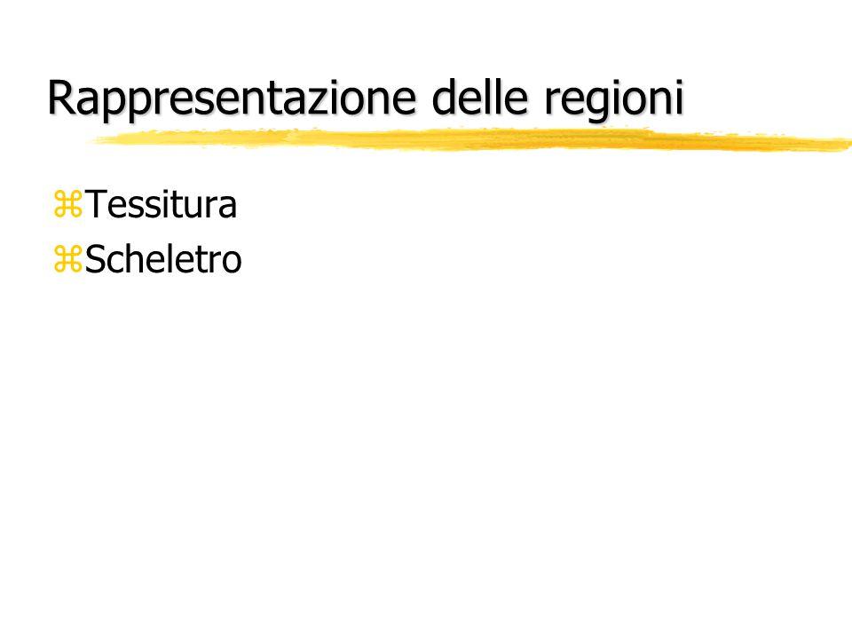 Rappresentazione delle regioni zTessitura zScheletro