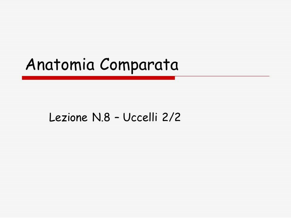 Anatomia Comparata Lezione N.8 – Uccelli 2/2